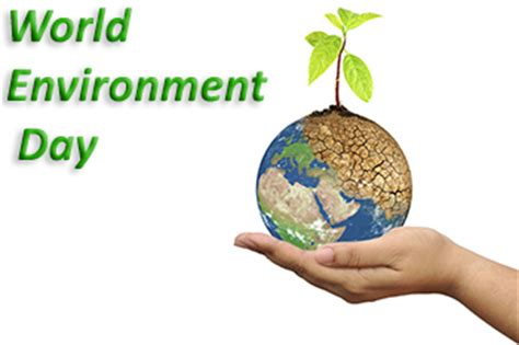 Essay on our environment